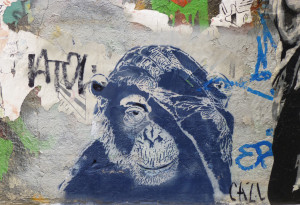 Affe fasst sich an die Stirn